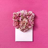 Post card with pink carnation flowers in an envelope on a magenta background.
