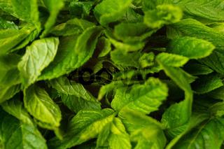 Blätter von marrokanischer Minze als Hintergrund