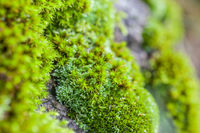 Close-up of mosses