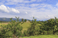 Fruit growing on hills near lake Constance, Landscape, Scenery, May