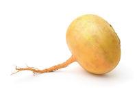 Ripe yellow turnip