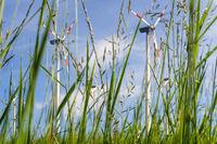 Wind turbines on green meadow