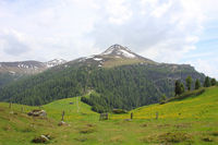Green Meadow with yellow flowers and Muttener Horn, mountain in Switzerland.