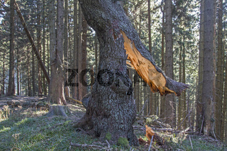 Sturmschäden im Bergwald