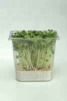 Watercress Box