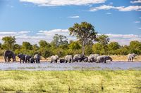 African Elephant on waterhole, Africa safari wildlife