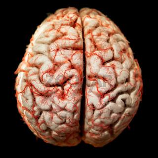 Human brain closeup