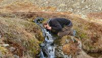 Drinking from a stream in Iceland