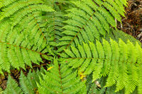 a typical fern in New Zealand