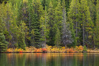 A background of a forest and a mountain lake