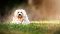 Dog in the meadow
