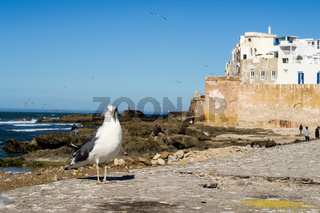 seagull on rock, photo as background