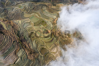 aerial view of terraced fields with clouds fog