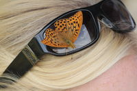 Butterfly on Sunglasses of a young lady