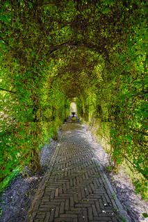 Green berceau arbour  overgrown garden path