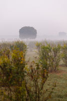 Plants and trees in the fog