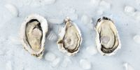 Fresh raw oysters on ice, overhead panoramic close-up shot