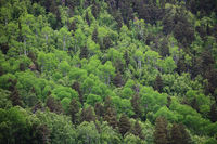 Mountain forest background