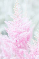 Close-up photo of beautiful pink flower