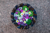 Bowl with water and flowers