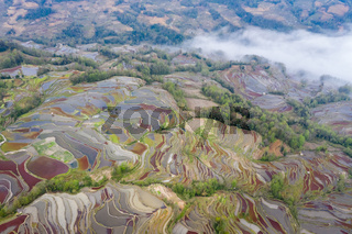 terraced field landscape and clouds fog in moring
