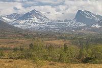 High moor Vaksvikfjellet