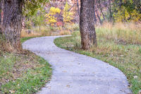 meandering path in woods