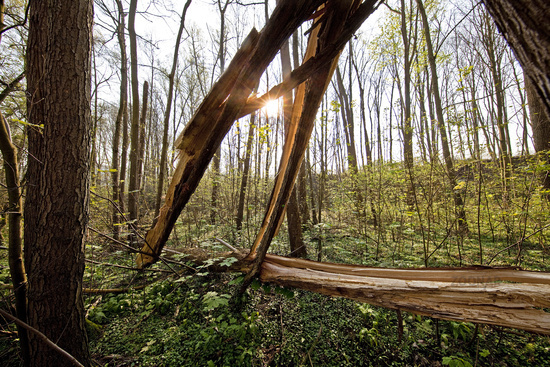 forest with splintered tree in spring, Witten, Ruhr Area, North Rhine-Westphalia, Germany, Europe