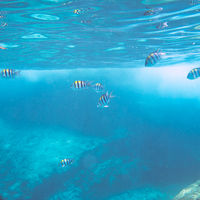 Tropical underwater world