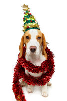 beautiful beagle dog in christmas tree hat