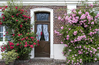 House facade with climbing roses