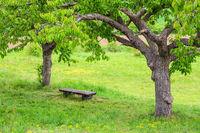 Landschaft mit Bäumen und Sitzbank im Harz