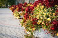Street flowerbed