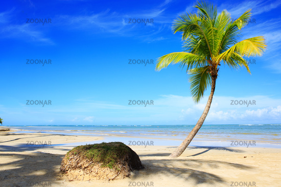 Palm tree on white tropical beach. Travel background.