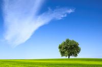 Beautiful landscape with lone tree