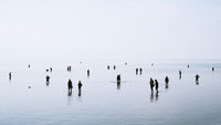 silhouetted people walking and swimming in shallow water