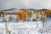 First Snow In The Autumn