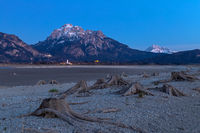 Tree stump in dry lake Forggensee after sunset with a view to Neuschwanstein castle