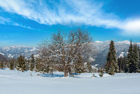 Winter Carpathian mountains view, Ukraine