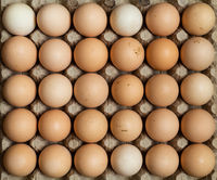Free range chicken eggs in egg tray