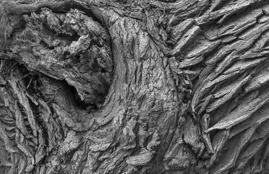 Structures of a tree trunk bark