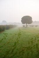 Morning fog in the park