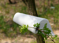 Paper towel roll on tree branch