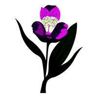 Mohit-Batch-5-Flower_Alstroemeria_01.eps
