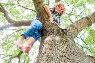 Blonder Junge klettert stolz auf einen Baum