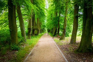 Beautiful linden alley in the summer park