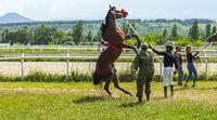 Before horse race on prize Ogranichitelni in Pyatigorsk