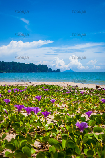 Flowers at Krabi beach, Thailand