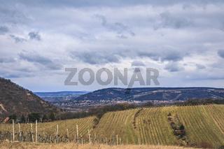 View over hibernal vineyards in Grinzing/Nussdorf in Vienna