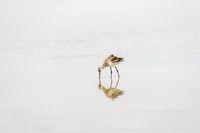 Isolated wetlands aquatic bird